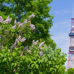 転職コラム-札幌で働くことって。